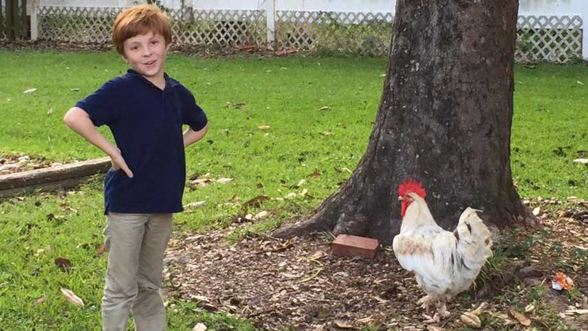 LANDers After School Child Poses with a Rooster